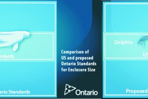 Ontario to End the Acquisition and Breeding of Orcas