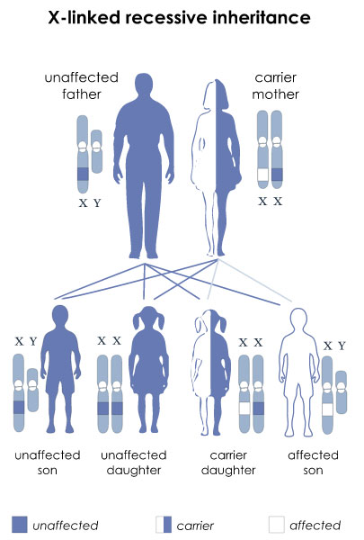 Duchenne muscular dystrophy is inherited in an X-linked recessive manner.